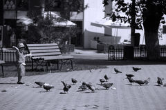 Kid feeding pigeons Royalty Free Stock Images