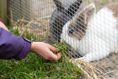 Kid feeding rabbit Stock Images