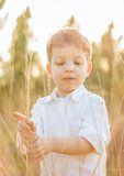 Kid in field playing with spikes at summer sunset Royalty Free Stock Images