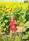 Kid in field of sunflowers. Child in field of sunflowers. Outdoors stock photography
