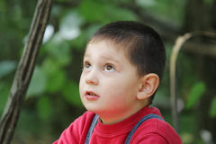 Kid in forest looking up Royalty Free Stock Images