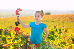 Kid girl in autumn vineyard field holding red grapes bunch. Blond Kid girl in happy autumn vineyard field holding red leaf grapes bunch in hand Stock Photos