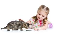 Kid girl feeding kitten Stock Image