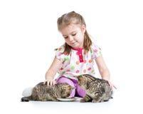 Kid girl feeding kittens Stock Image