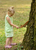 Kid girl feeds squirrel Stock Photo