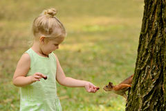 Kid girl feeds squirrel Stock Photos