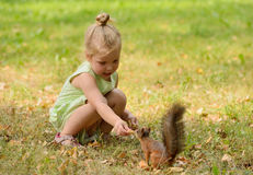 Kid girl feeds squirrel Stock Image
