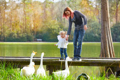 Kid girl and mother playing with ducks in lake Stock Photos