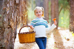Kid girl searching chanterelles mushrooms with basket in autumn Royalty Free Stock Images
