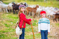 Kid girl shepherdess sisters happy with flock of sheep and stick Stock Image