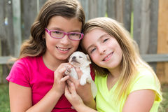 Kid girls playing with puppy pet chihuahua Stock Images