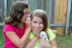Kid girls playing with puppy pet chihuahua. With doggy outdoor stock photos