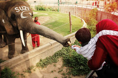 Kid is giving money to a elephant SUZI in the Lahore zoo Royalty Free Stock Image