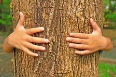 Hug a tree trunk. Kid hand hug a tree trunk Royalty Free Stock Photos
