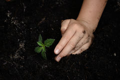 Kid hand planting little seedling Stock Image