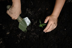Kid hand planting little seedling Royalty Free Stock Photography