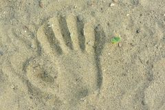 Kid hand prints on the sand neat a little plant.  stock photos