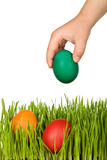 Kid hand putting easter eggs in the grass Stock Images