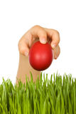 Kid hand with red easter egg over green grass Stock Photography