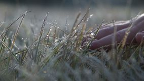 The kid hand touches to a frosty grass on a background light of the morning sun stock footage