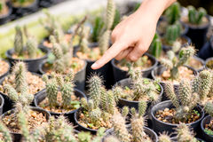 Kid hand touching cactus Stock Photography