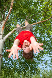 Kid hanging from a tree pretending he is  falling Royalty Free Stock Image