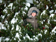 Kid hiding in fir trees Royalty Free Stock Photography