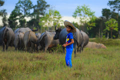 Kid with his buffalo. Royalty Free Stock Photography