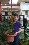 Kid in his urban garden with red tomatoes Stock Photography