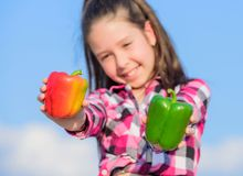 Kid hold ripe pepper harvest. Child presenting kinds of pepper. Fall harvest homegrown vegetables. Choose which. Kid. Girl hold red and green peppers sky royalty free stock photography