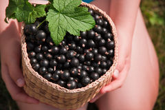 Kid holding a basket of black currant Royalty Free Stock Photo