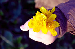 Kid holding flowers. Kids hand holding yellow flowers spring flowers Easter time one royalty free stock photos
