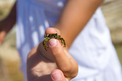 Kid holding little baby crab in hand during beach vacation. At Balearic islands stock photos