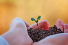 Kid holding new sprout in hands. Symbol of new life and ecology concept. Royalty Free Stock Photography