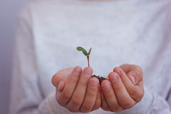 Kid holding new sprout in hands. Symbol of new life and ecology concept. Stock Photo