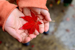 Kid holding wet autumn leaf Stock Photo