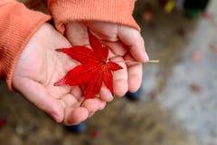 Kid holding wet autumn leaf Stock Photo