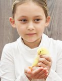 Kid  holding a yellow chicken Stock Photos
