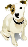 Kid jack-russell Stock Images
