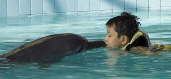 Kid Kissing Dolphin. A kid kissing dolphin in swimming pool. A human can live with animal peacefully royalty free stock photos