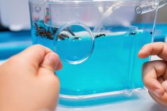 Kid looking at a transparent container with ants. Through magnifier stock image