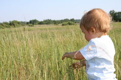 Kid on a meadow. Kid 2-3 years on a meadow, Poland Stock Image