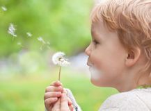 Kid in the meadow blowing wishes on dandelion seed Royalty Free Stock Photography