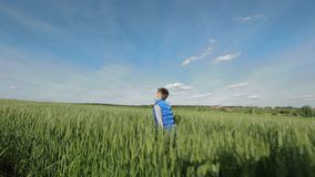 Kid on the meadow stock footage