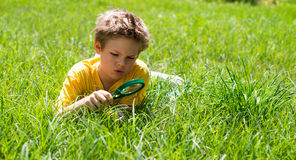 Kid on the meadow looking the grass with a magnifying glass. Stock Photos