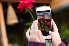 Kid Mobile. Kid hold mobile taking a red rose Stock Image