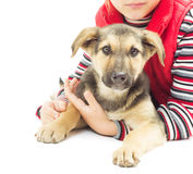Kid and mongrel Stock Images