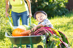 Kid and mother in domestic garden. Adorable boy standing near wheelbarrow with vegetables harvest. Healthy organic fod Royalty Free Stock Image
