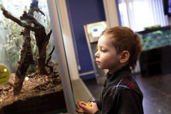 Kid in the museum Royalty Free Stock Images
