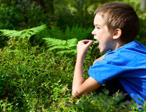 Kid picking berries Royalty Free Stock Images